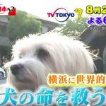 横浜世界一の獣医(心臓病)の動物病院はどこ?口コミ費用は?施設がスゴイ!?(jasmine)